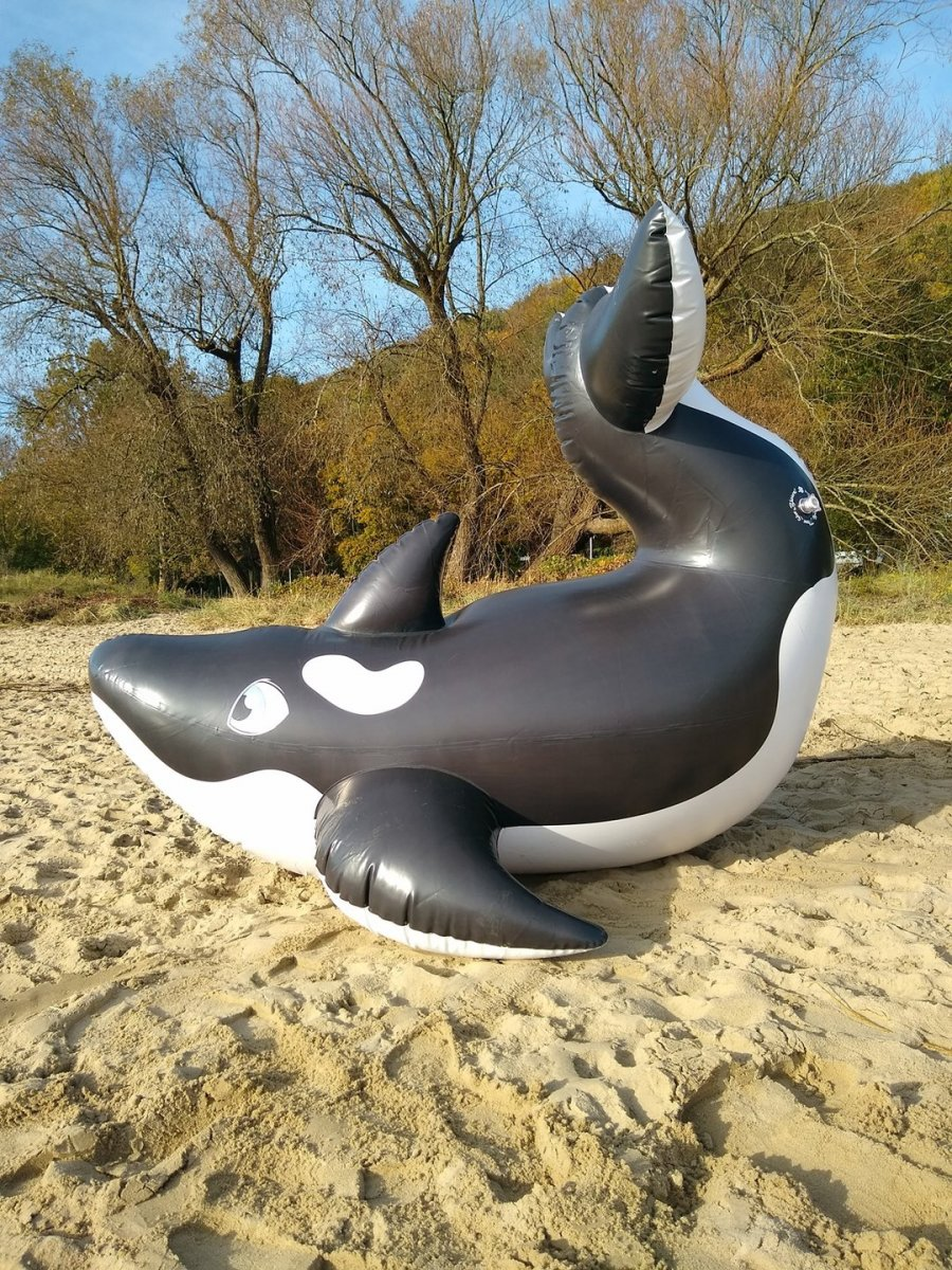 Horseplay Orca Whale - Left Side