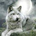 Whitewolflady